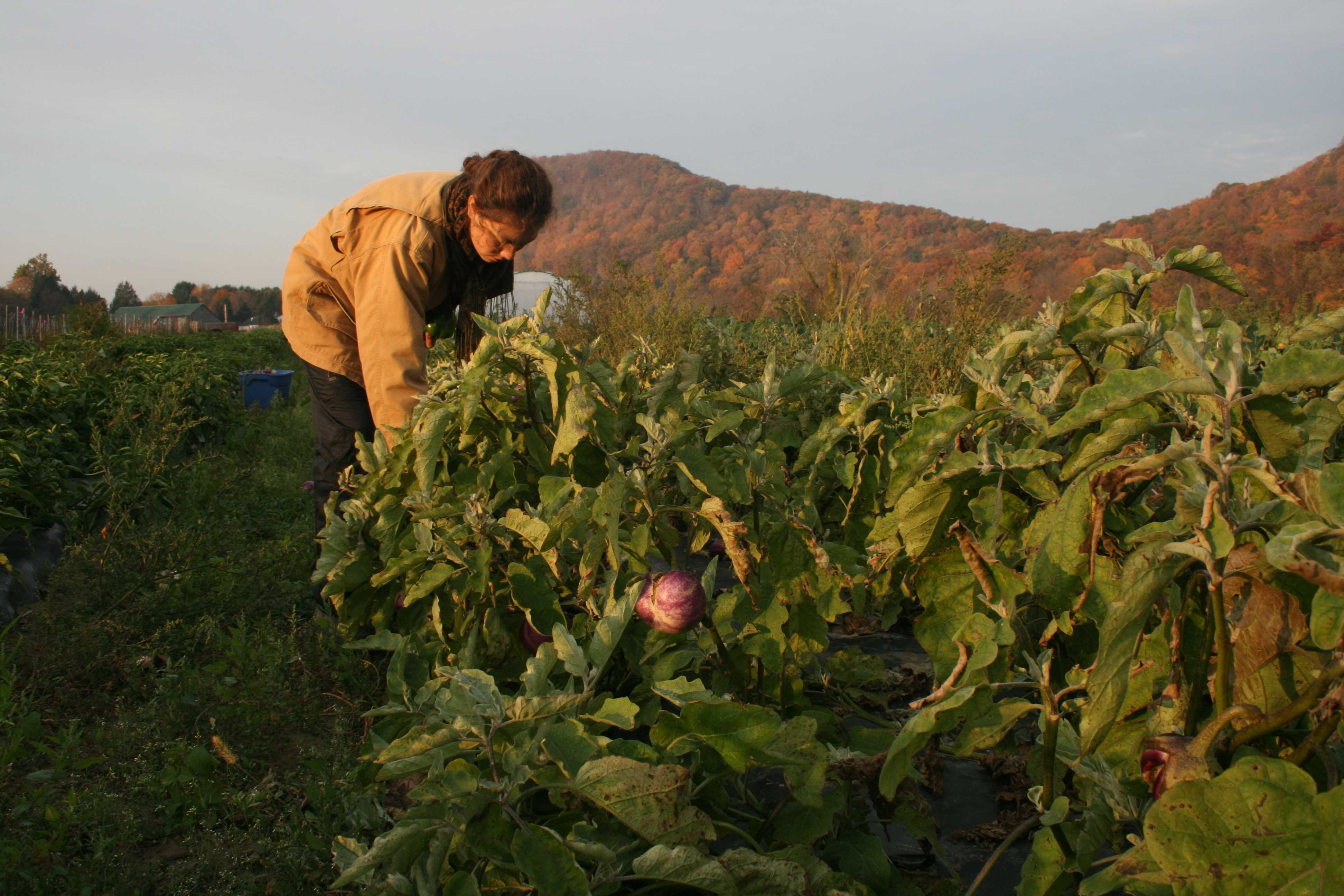 Photos of the Student Farming Enterprise